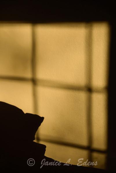 """""""Window Shadow"""""""
