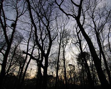 """Wintery Trees"""