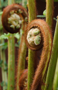 """Palm Bud"""