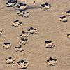 Webbed Footprints