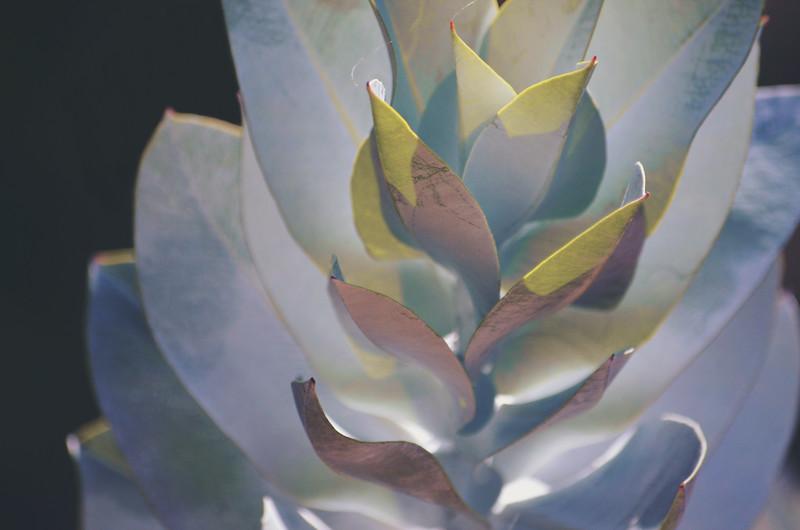 Eucalyptus Shadow and Light