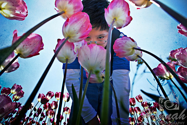 An image of a boy smelling the pink tulips at the Wooden Shoe Tulip Farm in Woodburn, Oregon.  © Copyright Hannah Pastrana Prieto