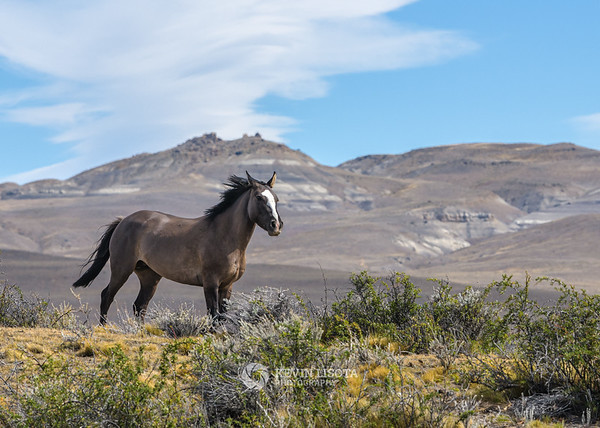 Horse in Patagonia