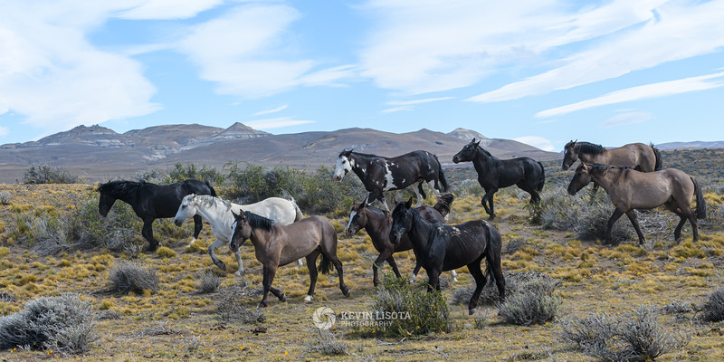 Herd of horses in Patagonia