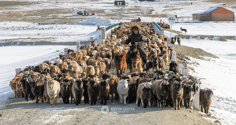 Herder directs goats and sheep across a bridge