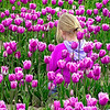 This picture was taken in April 2004 during the Skagit County Tulip Festival with an Olympus C-750UZ.  This is one of those once in a lifetime shots with a girl whose outfit blends in perfectly with the color of the tulips amongst which she sits.