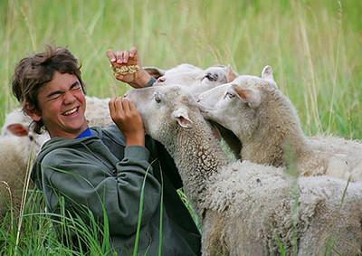konsta ja lammas11