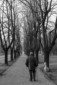 Fall - Viale Umberto I, Reggio Emilia, Italy - November 22, 2014