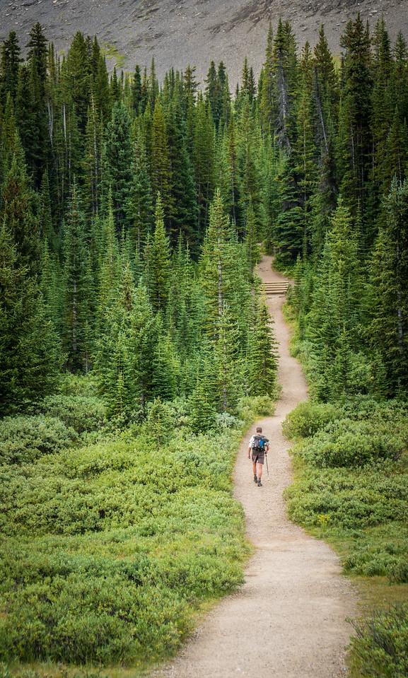 Parker Ridge Trail, Banff National Park, Alberta, Canada