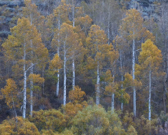 """""""Autumn Flagpoles"""""""
