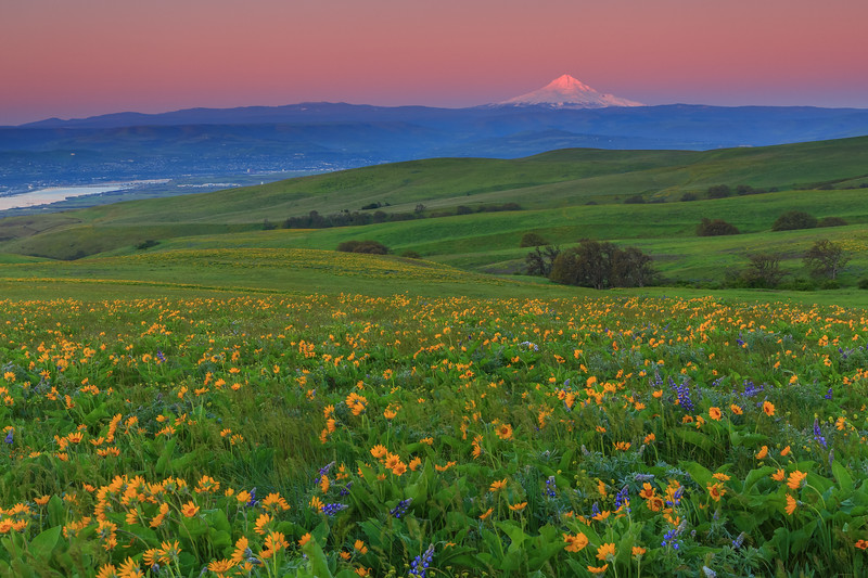 Mount Hood and The Dalles from Columbia Hills State Park, Washington
