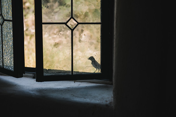 Bird In St Agnes Church Window Terlingua Texas