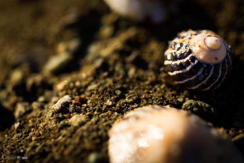 Sea Shells sown among sand