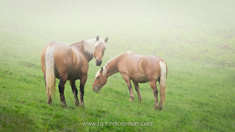 Pic(k) of the week 23: Horses in the mist