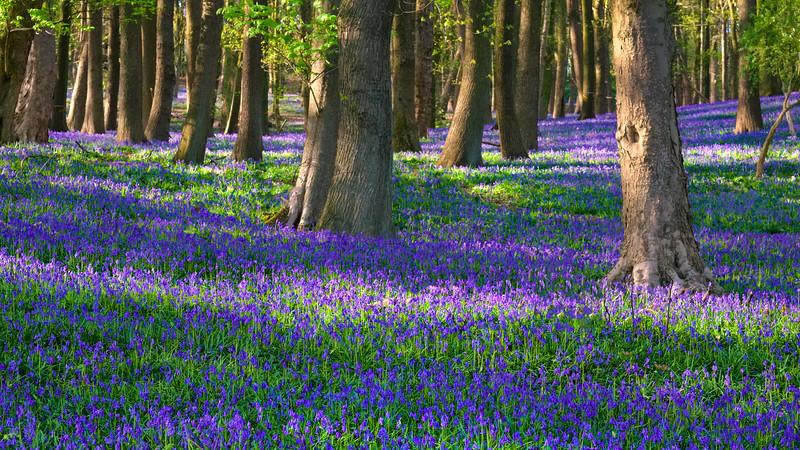 Blue forest, Kemmel, Belgium