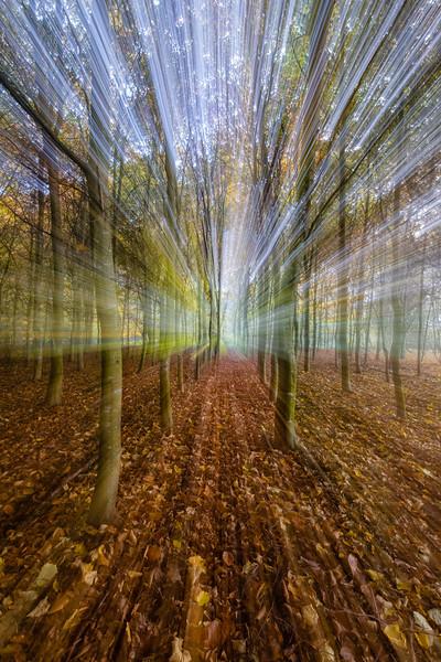 FOREST ZOOM BURST