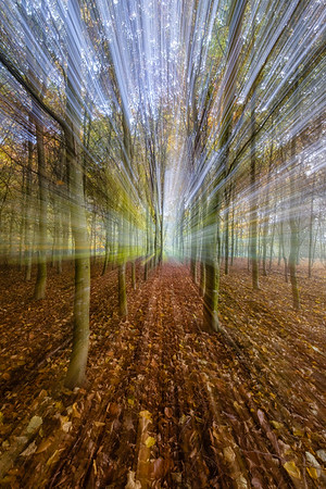 FOREST ZOOM BURST