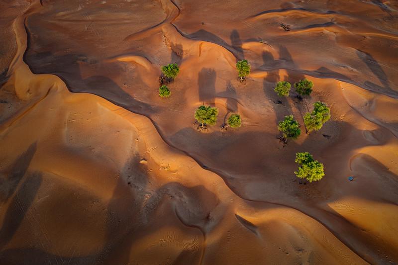Desert trees aerial , UAE