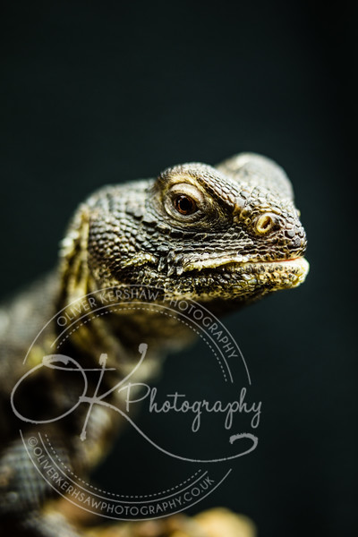 18% grey-Reptiles-By Okphotography-0036