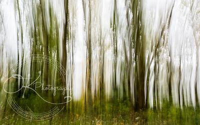 Blurry trees
