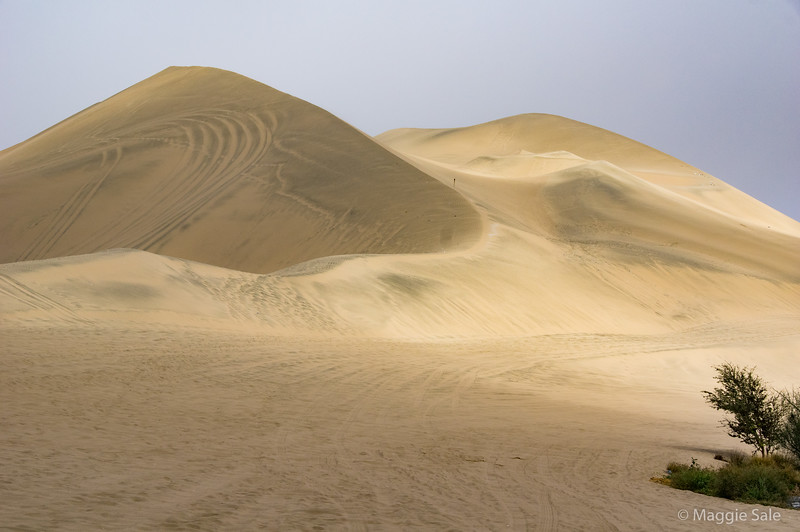 Some of the dunes close by which began to appear as the mist rose.