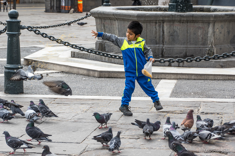 This boy was feeding the pigeons in a square in front of a yellow church in central Lima.