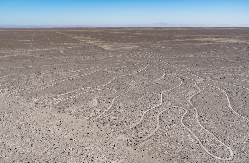 This view of a small part of one of the large Nazca geoglyphs (some are geometric lines and others represent various animals) was taken from a tower beside the road we were on, crossing the high plain that makes up the desert. They were cut into the land by the Nazca people between 500 BC and 500 AD. It is so arid here that they are not washed away and are the result of the top layer of rock (a reddish colour) being scrapped away to show the lighter soil underneath. They are best seen from the air, which was an option that many in our group took.