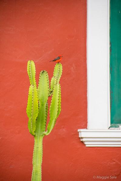 A bird on a cactus in Nuacachina