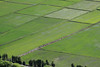 Flooded paddy fields of rice along the Rio Ocona Valley - Camana province - Arequipa department.