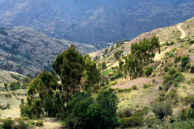 Morning sunlight upon the steep cultivated slopes - Huancavelica department.
