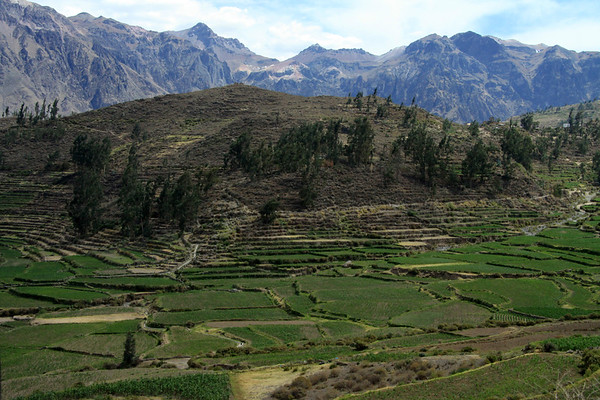 Across the Rio Hualca Hualca Valley,  among the cultivated fields and stone terraces, here along the slope of the Corillera Ampato - to the distal ridges and slopes of the Cordillera Chila, with the Colca Canyon between - Arequipa department.