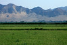 Across the rice paddy fields to the morning sunlight striking the Cordillera Occidental Andes (range) - northern La Libertad department - late summer season.