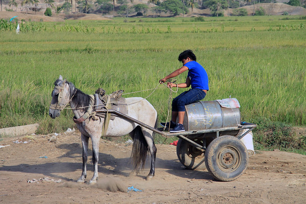 Peruvian horse-drawn water-wagon - with the operator tugging hard on the reins to find reverse gear - near the village of San Francisco - Sullana province - Piura department.