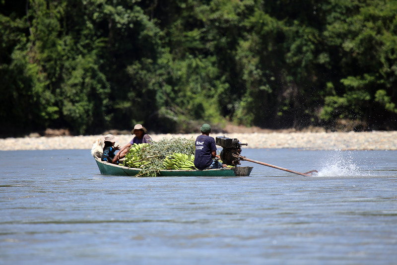 Banana transport down the Rio Madre de Dios - southwestern Amazon Basin - southeastern Peru.