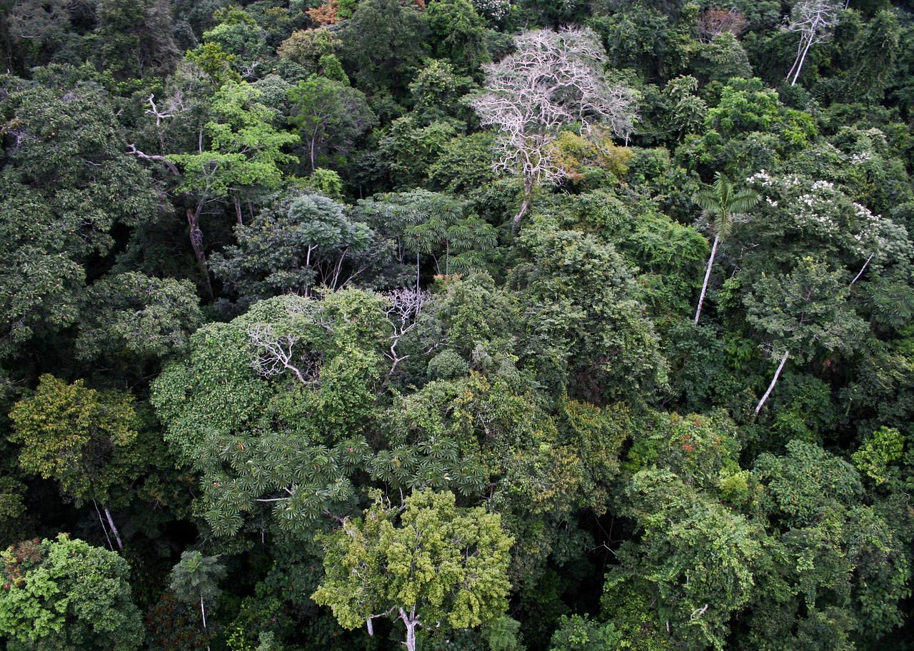 Amazonian Forest, Los Amigos Biological Station, Peru