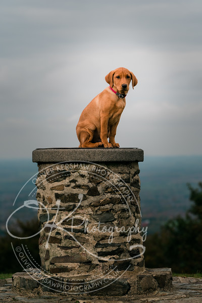 -Pet photography-By Okphotography-130214