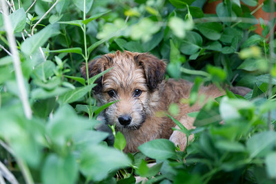 Puppy chewing plant