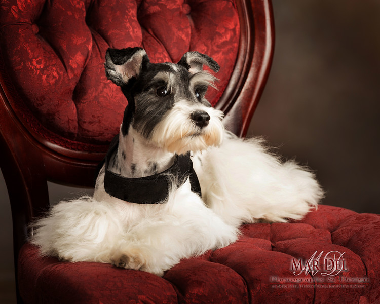 puppy on Red Chair