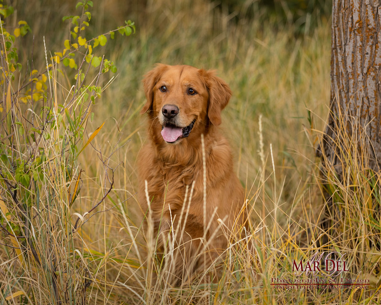 Dog in grass location portrait