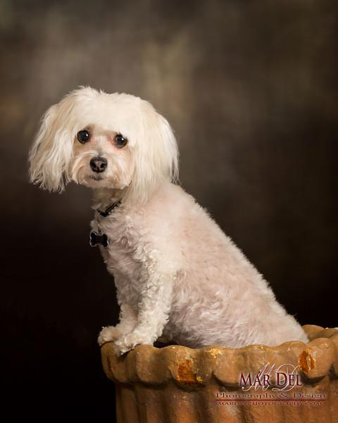 white puppy in pot
