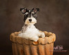 dog pictures in pot