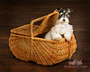 Dog portrait in Basket
