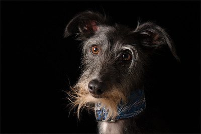 professional dog photoshoot in Richmond Surrey