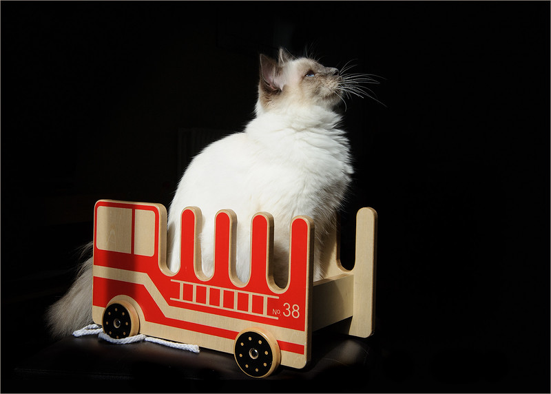 Cat Photographer Surrey