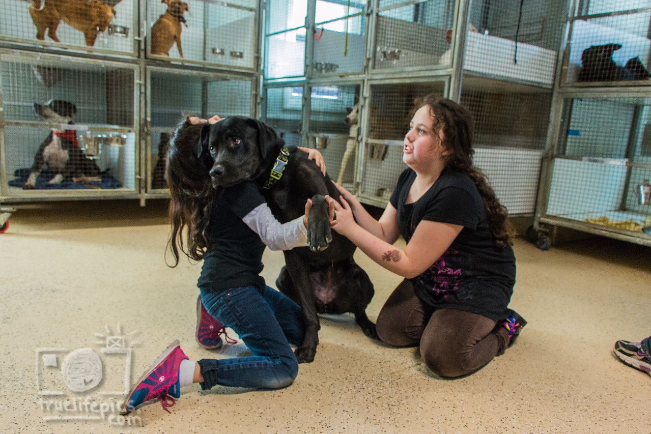 Volunteer at a dog rescue