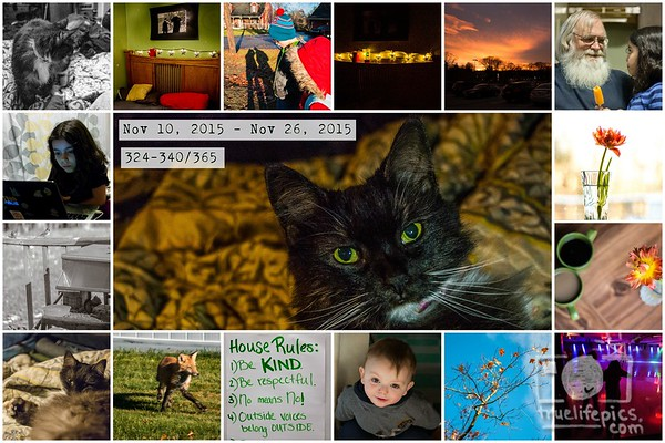 Project 365 - Page 19
