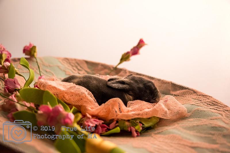 Pets & Animals - 4 Days New