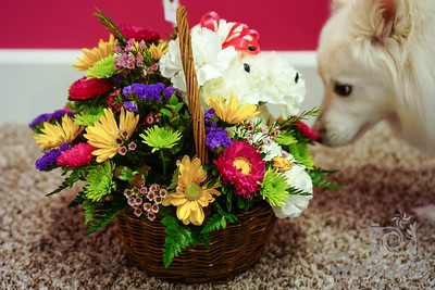 Close-up of an American Eskimo named Chabby smelling a basket of flowers that is shaped like a dog  © Copyright Hannah Pastrana Prieto