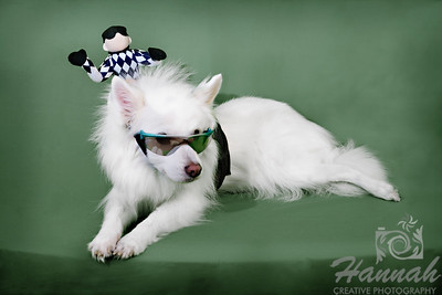 An American Eskimo in Costume
