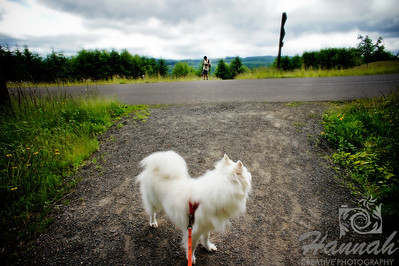 An American Eskimo dog entering a trail at L.L. Stub Stewart State Park in Oregon  © Copyright Hannah Pastrana Prieto
